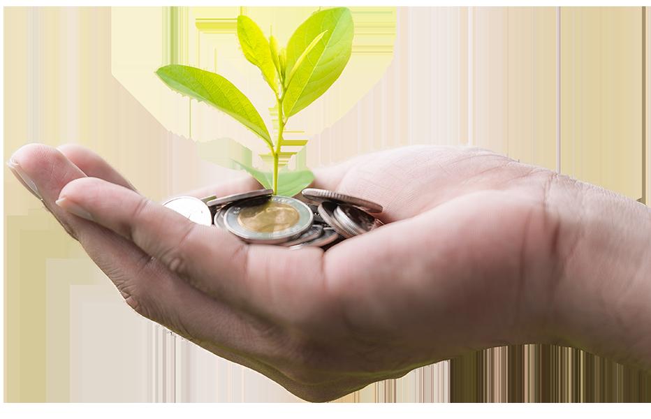 Une plante qui grandit grâce à de la monnaie
